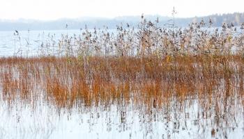 Суровая красота озера Райскумс