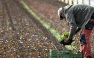 Latvijā pieaug bioloģisko lauksaimnieku skaits. Visvairāk audzē graudus un ražo pienu