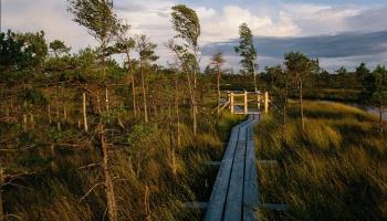 Apmeklētājiem slēgtas Līgatnes dabas takas, vairāki informācijas un dabas centri