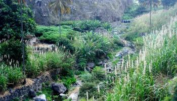 Zaļā raga salas