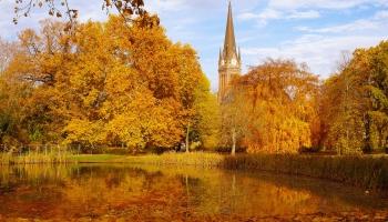 """Опавшие листья в большом городе: как решить """"красивую проблему""""?"""