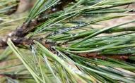Lauksaimniekiem jāgatavojas ievērojamām atļauto pesticīdu saraksta izmaiņām