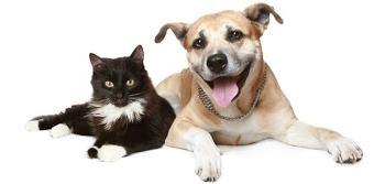 Par suņiem, kaķiem un darīšanām!