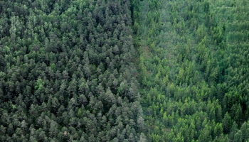 Latvijā stāda mežu kas būs kvalitatīvāks nekā tas ir šobrīd