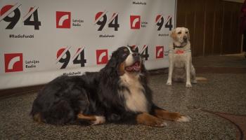 Собаки-помощники: незаменимые спутники по жизни