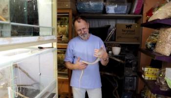 Желтопузик: безногая ящерица с мультяшным названием