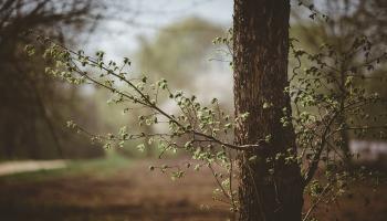 Pavasara dabas veltes