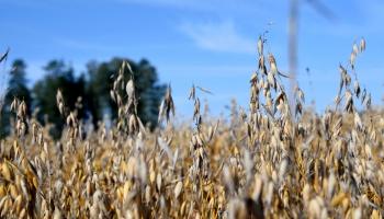 Lauksaimnieki var pieteikties apgrozāmo līdzekļu aizdevumam