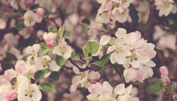 Pavasara ziedi? - Apēdīsim!