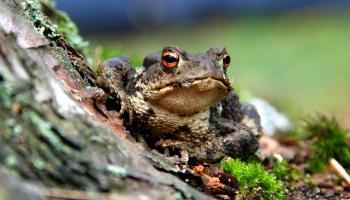 Весна ползучая: пробуждение жаб и время змеиных свадеб