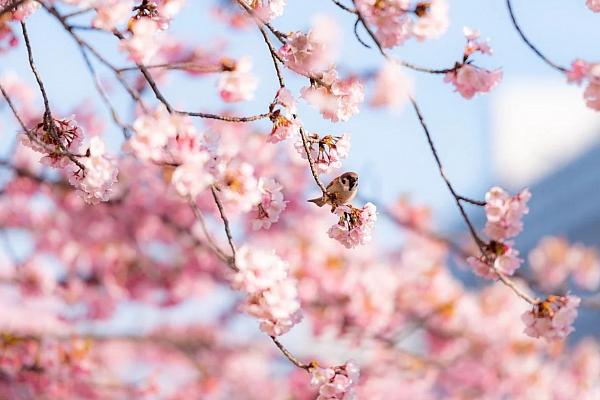 Японская весна: не только сакура!