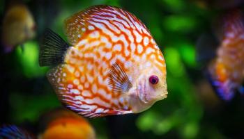 Первый аквариум: шаг за шагом