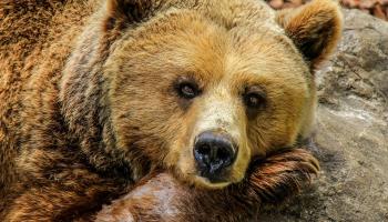 ВИДЕО. Привет, медвед, или Как вести себя при встрече с диким обитателем леса