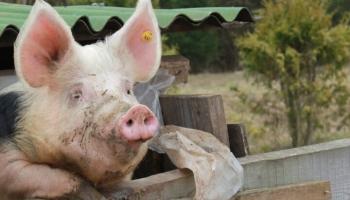 Lauksaimnieki izjūt ilgstošas ekonomiskās dīkstāves sekas