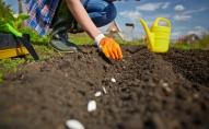 Pavasarī gaidāms kvalitatīva kultūraugu sēklas materiāla trūkums