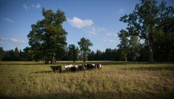 Parkveida pļavu Latvijas Dabas fonds izraudzījis par 2020.gada dzīvotni