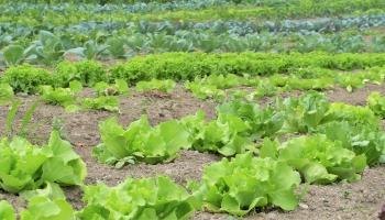 VAAD rīko kampaņu par augu aizsardzības līdzekļu atbildīgu lietošanu