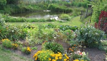Kā atjaunot dārza skaistumu vasaras nogalei un spēcināt dārzu ziemai?
