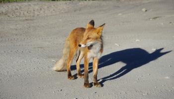 Пока все дома, или Улицы во власти диких животных