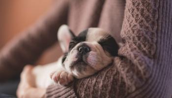Аксессуары для собаки: что действительно нужно вашему любимцу?