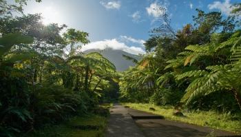 Rīts, kad modinājām cilvēkus džungļos