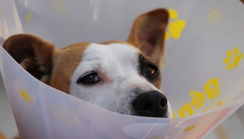 Стерилизация домашнего животного: не всё так просто, как кажется