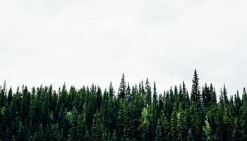 Agromežsaimniecība: kā šāda pieeja ietekmē dabas daudzveidību