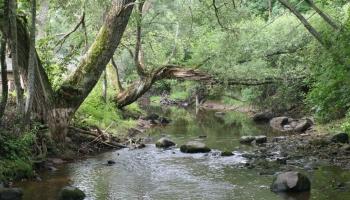 Gada dzīvotne - upju straujteces un dabiski upju posmi
