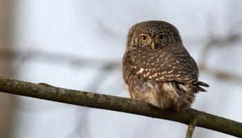 Vai zini, kāpēc putni dzied ne tikai pavasarī, bet arī rudenī?