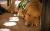 Īpašie cilvēku palīgi: suņi-asistenti un suņi-pavadoņi