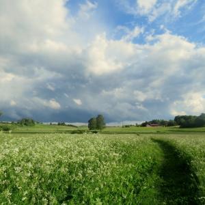 Jūrtakas posms pašu acīm, zālāja un pļavu nozīme Latvijas ainavā