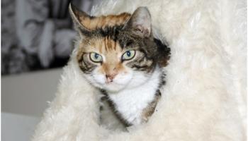 """""""Īpašās vajadzības"""" kaķiem netraucē būt ļoti mīļiem mājdzīvniekiem"""