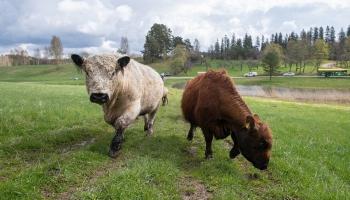Mobilais ganāmpulks jau ceturto gadu rūpējas par dabiskajiem zālājiem
