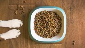 """""""Когда кормить - вредить"""". Ветеринар об ошибках в питании домашних животных"""