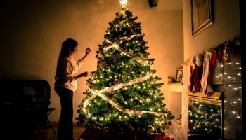 Елочным гурманам – о лесных и декоративных ёлках