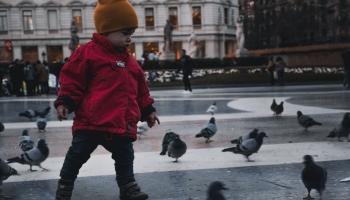 Putni pilsētā ziemā: vai viņiem nepieciešama cilvēku palīdzība