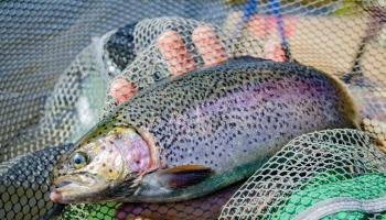 Zivjaudzēšana Latvijā un nozares attīstības iespējas