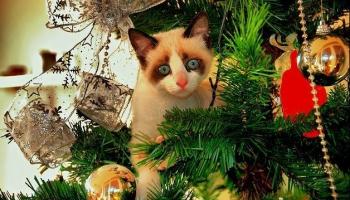 """""""Ziemassvētku brīnums"""" - dziesma par brīnumu, kuru jāgrib ieraudzīt"""