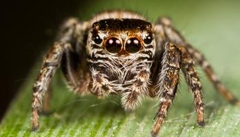 Rīgas pilsētas sabiedriskajās vietās tiek izplatītas viltus ziņas par indīgiem zirnekļiem