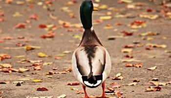 Осень: что в этом году насчитали орнитологи?