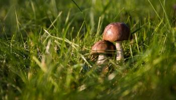 Как вырастить грибы дома: простые советы