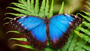 Коллекционер бабочек Андрис Трейманис: это просто красиво