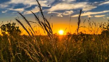 Saule brida rudzu lauku