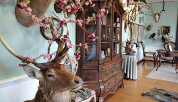 Музей Мюнхгаузена в Дунте: путешествие в страну иллюзий