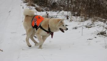 Suns palīdz atrast pazudušus cilvēkus. Pieredzes stāsti