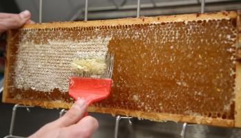 """Biznesa ideju konkursa """"Laukiem būt!"""" laureāte no Latgales audzēs bišu mātes"""