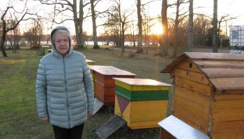 Lolita Rudzīte Rembates pagastā nodarbojas ar biškopību jau daudzus gadus