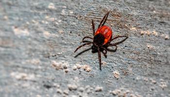 Kā sevi pasargāt pret dažādu kukaiņu dzēlieniem?
