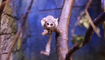 Ночная жизнь Рижского зоопарка