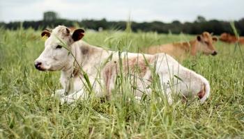 LLKC Lopkopības nodaļas vadītāja Silvija Dreijere par situāciju piensaimniecībā